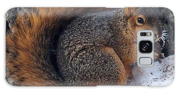 Indiana Squirrel In Winter With Nut Galaxy Case