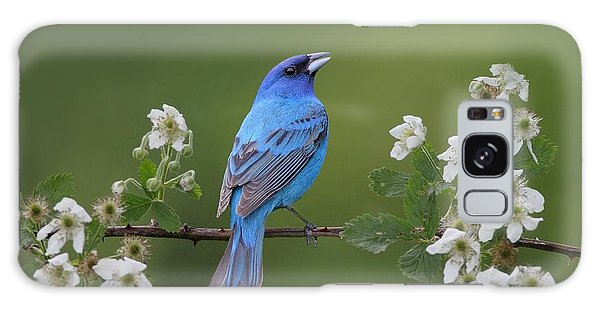 Indigo Bunting On Berry Blossoms Galaxy Case