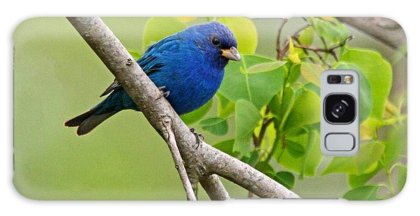 Blue Indigo Bunting Bird  Galaxy Case