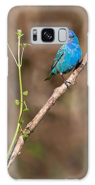 Indigo Bunting Portrait Galaxy Case