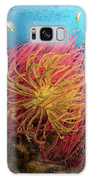 Sea Lily Galaxy Case - Indonesia, Papua, Pisang Islands by Jaynes Gallery