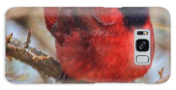 Inquisitive Cardinal Galaxy Case
