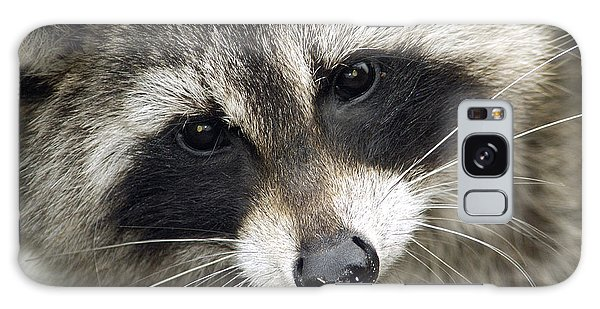 Inquisitive Raccoon Galaxy Case by Jane Axman