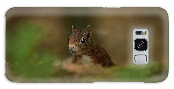 Inquisitive Red Squirrel Galaxy Case