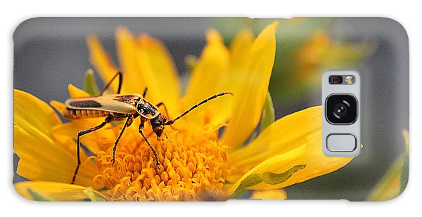 Insect On Cowpen Daisy Galaxy Case
