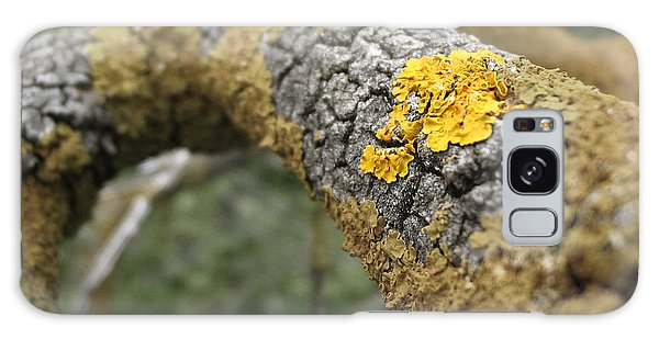 Isolated Lichen Galaxy Case