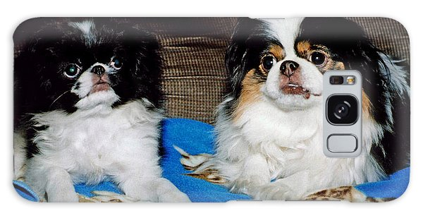 Japanese Chin Dogs Looking Guilty Galaxy Case by Jim Fitzpatrick