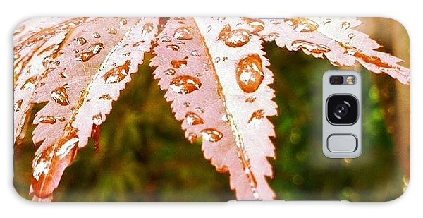 Colorful Galaxy Case - Japanese Maple Leaves by Marianna Mills