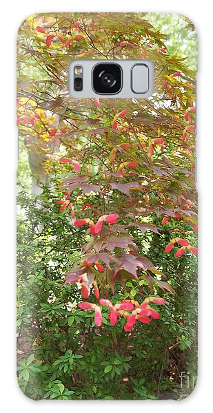 Japanese Maple Spring 3 Galaxy Case by Nancy Kane Chapman