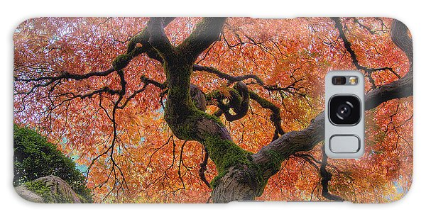 Japanese Maple Tree In Fall Galaxy Case