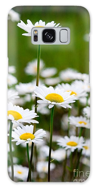 Jasper - Oxeye Daisy Wildflower 2 Galaxy Case