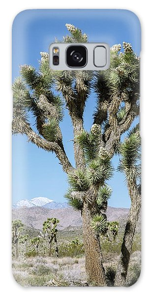 Desert Flora Galaxy Case - Joshua Tree (yucca Brevifolia) In Flower by Bob Gibbons/science Photo Library