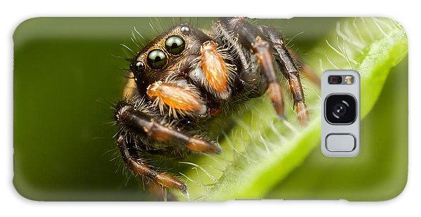 Jumping Spider Phidippus Clarus I Galaxy Case