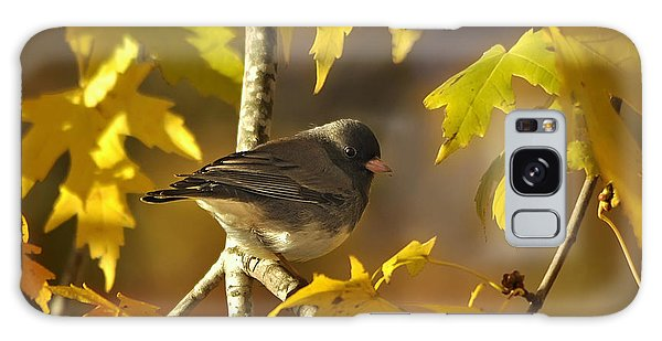 Junco In Morning Light Galaxy Case by Nava Thompson
