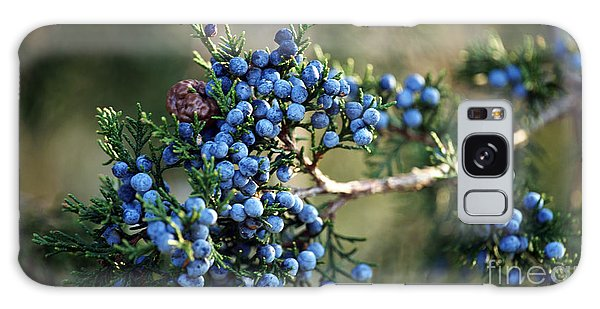 Juniper Berries Galaxy Case