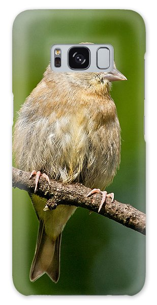 Juvenile American Goldfinch Galaxy Case