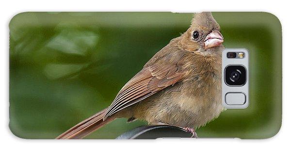 Juvenile Cardinal Galaxy Case