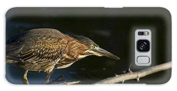 Juvenile Green Heron Galaxy Case by Larry Bohlin