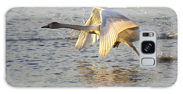 Juvenile Whooper Swan Taking Off Galaxy Case