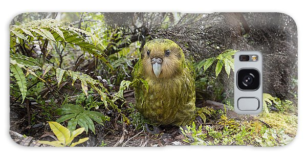 Galaxy Case featuring the photograph Kakapo Male In Forest Codfish Island by Tui De Roy