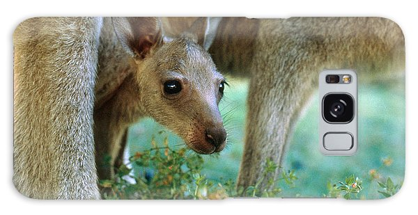 Kangaroo Joey Galaxy Case