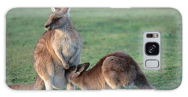 Kangaroo With Joey Galaxy Case