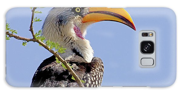 Kenya Profile Of Yellow-billed Hornbill Galaxy Case
