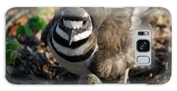 Killdeer Mom Galaxy Case by Skip Willits