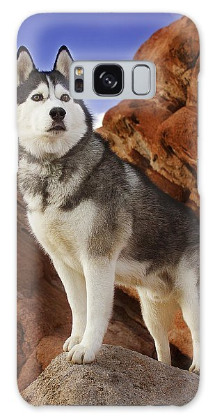 King Of The Huskies Galaxy Case