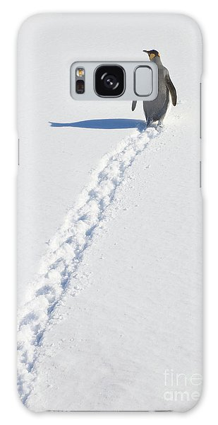 King Penguin And Tracks S Georgia Island Galaxy Case by Yva Momatiuk and John Eastcott