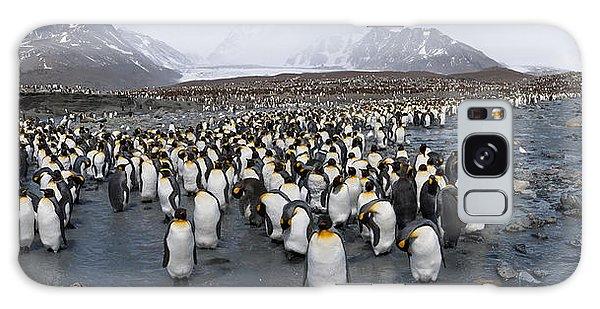 King Penguins Aptenodytes Patagonicus Galaxy Case
