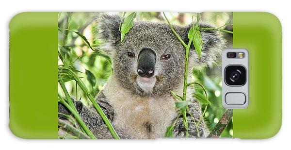 Koala Bear Galaxy Case