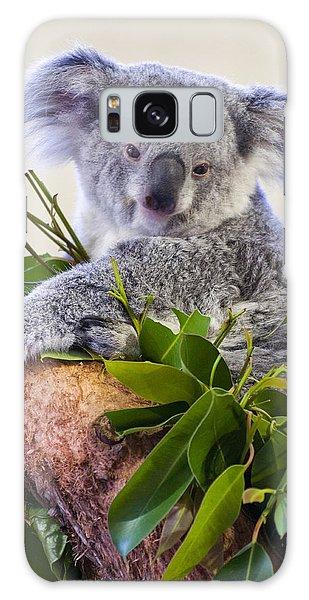 Koala Galaxy Case - Koala On Top Of A Tree by Chris Flees
