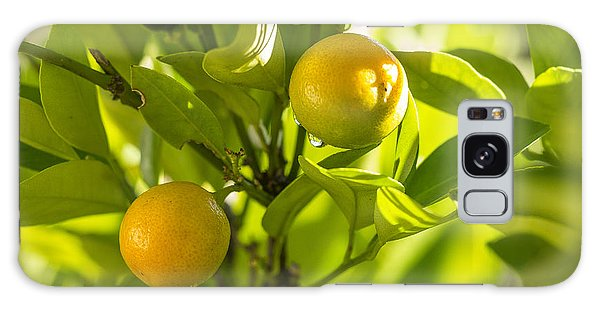 Kumquats Galaxy Case
