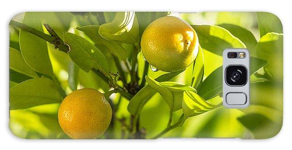 Kumquats Galaxy Case