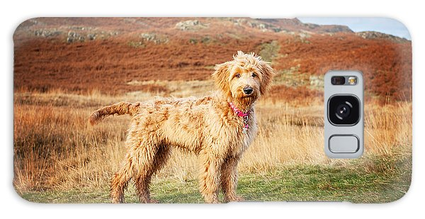 Labradoodle Puppy Galaxy Case by Mike Taylor