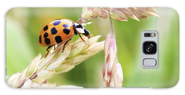 Lady Bug On A Warm Summer Day Galaxy Case