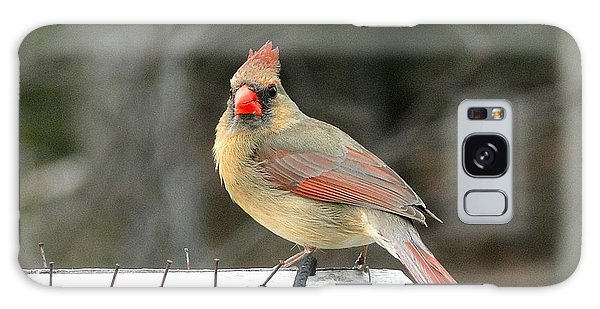 Lady Cardinal Galaxy Case by Cindy Croal
