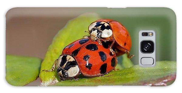 Ladybird Coupling Galaxy Case