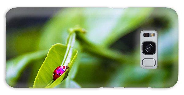 Hiding Galaxy Case - Ladybug Cup by Marvin Spates