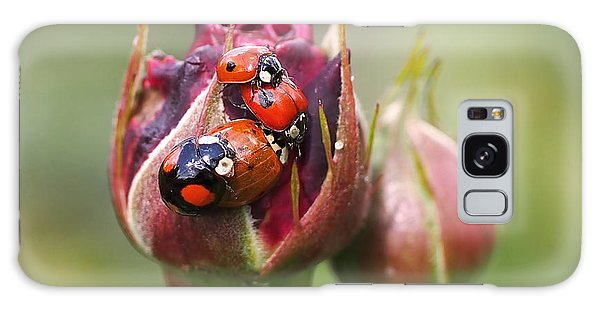 Ladybug Foursome Galaxy Case