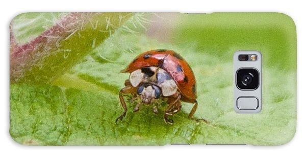 Ladybug On Boneset Leaf Galaxy Case