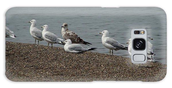 Lake Erie Birds Galaxy Case