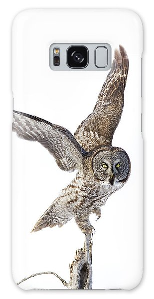 Lapland Owl On White Galaxy Case by Mircea Costina Photography