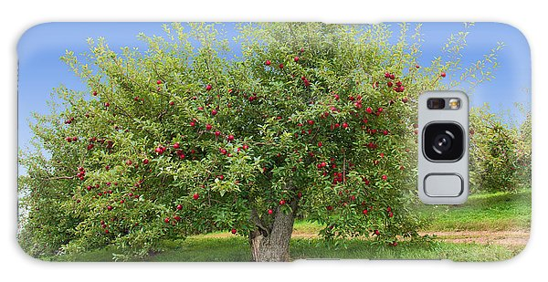 Large Apple Tree Galaxy Case