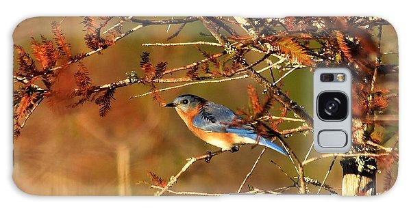 Late Fall Bluebird Galaxy Case