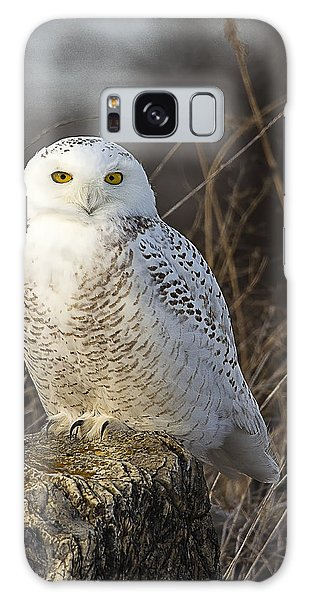 Late Season Snowy Owl Galaxy Case