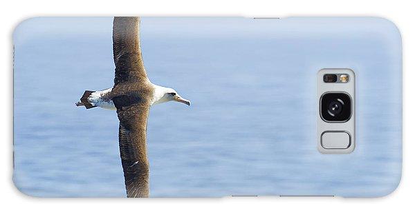 Laysan Albatross No 1 - Kilauea - Kauai - Hawaii Galaxy Case