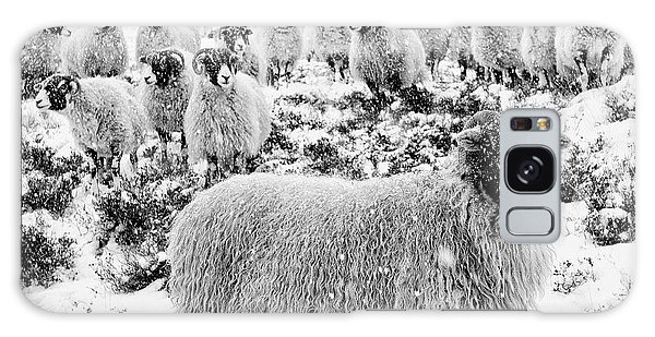 Sheep Galaxy S8 Case - Leader Of The Flock by Janet Burdon