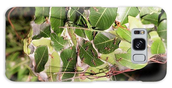 Leaf-stitching Ants Making A Nest Galaxy Case by Tony Camacho